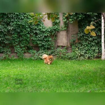 ветеринар бишкек in Кыргызстан | УСЛУГИ ВЕТЕРИНАРА: Гостиница для собак уезжаете в командировку или отпуск, и не знаете, с