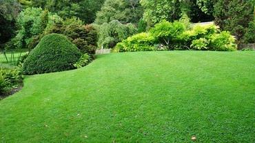 Газон!!! Мы посеем газон в Кант