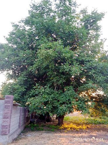 30 объявлений: Доски   Лиственные деревья   Гарантия