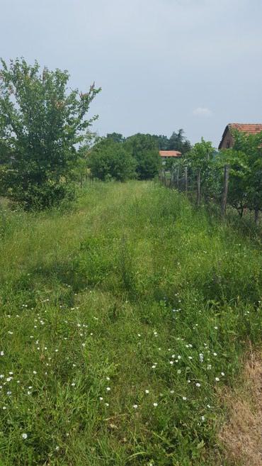 Seosko domacinstvo na placu od 57 ari u Obrenovcu (3 km od centra) na - Belgrade