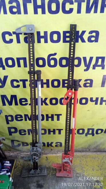 джек рассел терьер бишкек in Кыргызстан | СОБАКИ: Продаю хай-джек