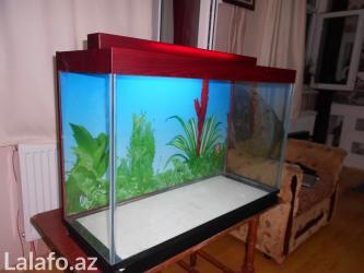 Bakı şəhərində Teze akvarium 120 litrelik