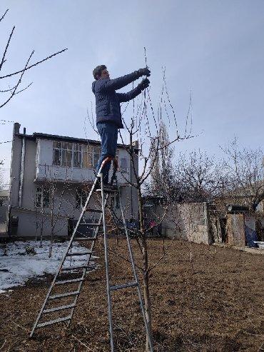 Бытовые услуги в Кыргызстан: ОБРАБОТКА ПЛОДОВЫХ и ХВОЙНЫХ ДЕРЕВЬЕВ и ОБРЕЗКА. Бригада 4 человека у