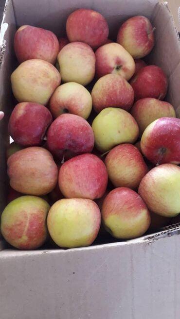 Овощи, фрукты - Кыргызстан: Яблоки превосход оптом с доставкой по городу БишкекЯблоки, яблоко