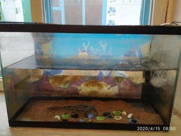 рыбы в Кыргызстан: Продаю, Аквариум с рыбой, и кампрессор. 30л