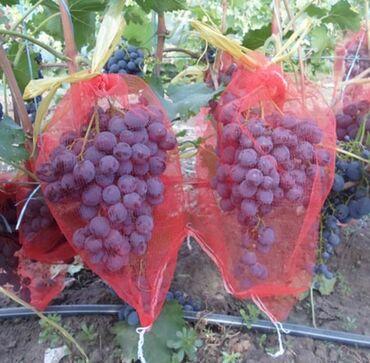 Куплю мешочки от птиц для винограда