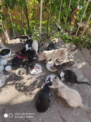Коты - Кыргызстан: Срочно нужна помощь SOS Умерла хозяйка добрая бабушка и все ее