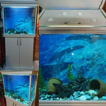 Akvariumun- Uzunluğu 60 sm, hündürlüyü 60 sm, eni 25 sm.Altında şkafı