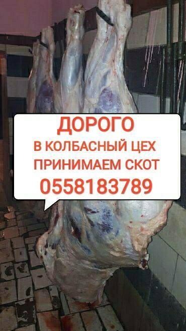 стеклянная колба для кофеварки bosch в Кыргызстан: Куплю скот на забой в колбасный цех