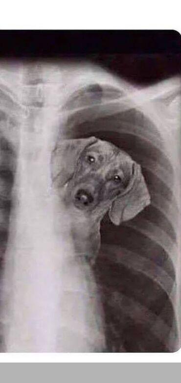 Дрессировка собак всех пород ОКД и ЗКС