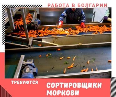 Сортировщик морковки в Болгарию Работа в Европе Требования:- Опыт