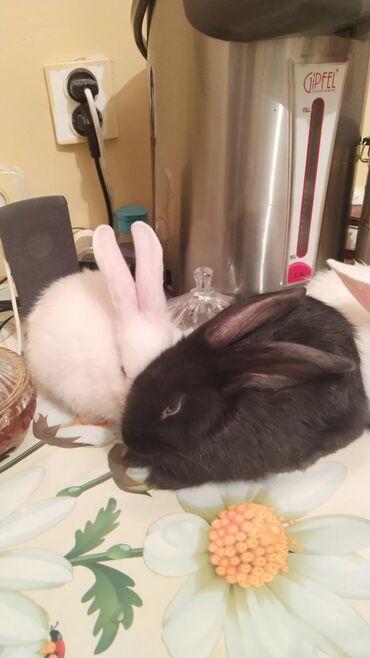 Продаю кроликов,цена 400 сом