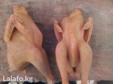 Мясо домашней птицы. Куры, петухи в Бишкек