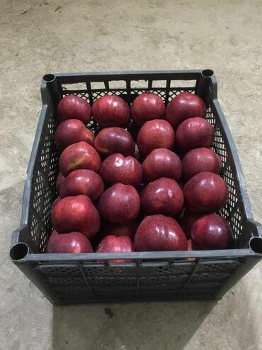 19 объявлений: Продаётся оптом яблоки