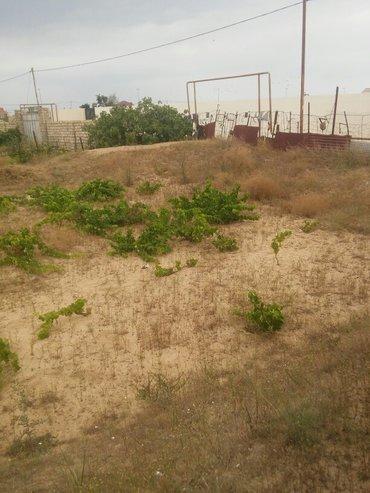 Bakı şəhərində kurdaxanida lehic bağlarinda 12 sot torpaq satilir uzumu ve əncil ağac