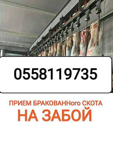 Колбасный цех принимает коров, лошадей бычков и тёлок любого возраста