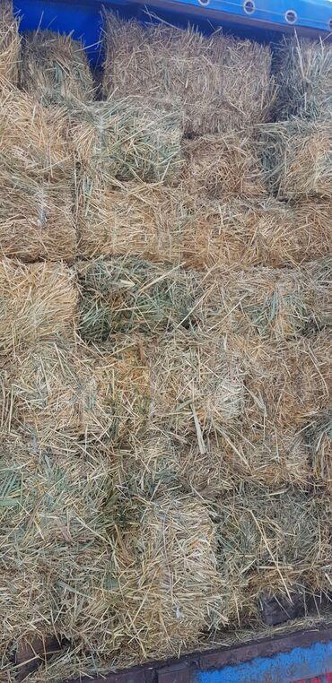 веб студия вакансии в Кыргызстан: Есть тюки от салома, плотные, большие, ячменный смешанные с камышом