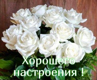 Поиск сотрудников (вакансии) - Бишкек: Посудомойки. Без опыта. 6/1. Киргизия 1