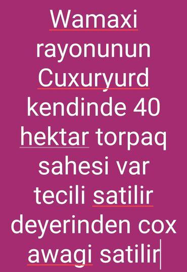 45000 sot, Kənd təsərrüfatı, Mülkiyyətçi, Müqavilə