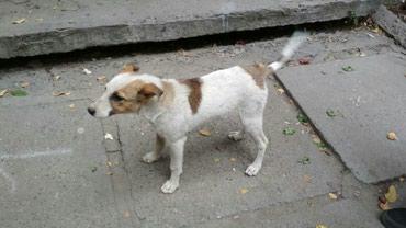 Отдам щенка-девочку в хорошие в Бишкек