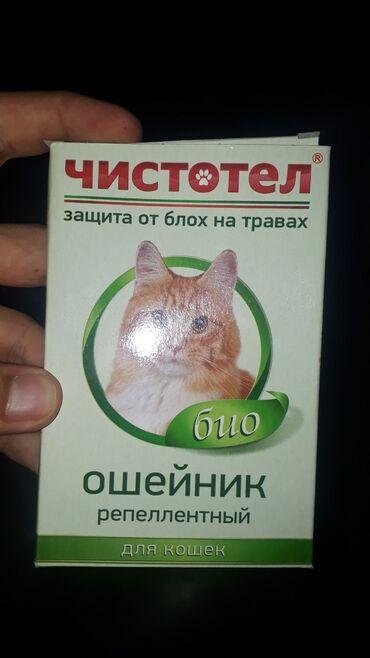 Sevimli pisikler ucun yeni bit ve bire eleyjine oshenikler. Catdirilma