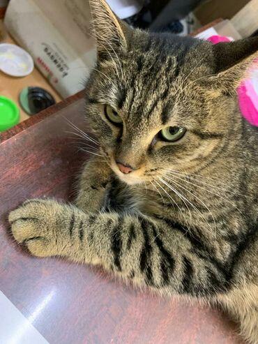 стерилизовать кошку в Кыргызстан: Кошечка возраст полтора года стерилизована, обработана от паразитов