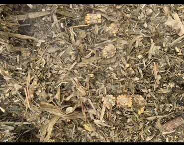 семена газонной травы в Кыргызстан: Продаю Силос в селе ленинское