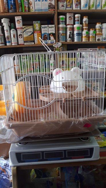Клетка для сирийских хомяков,крысок,свинок в Бишкек