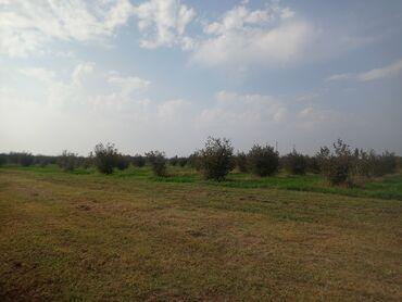 uşaq üçün hava ilə doldurulan təpəcik in Azərbaycan | ƏTƏKLƏR: SATILIRR!! 4 Hektar yarım fındıg sahəsidi, Fındığlar 5 ildi