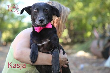 Pas - Srbija: Udomljava se KasjaKasja je jedna od dobroćudnih ženki koje su svoje