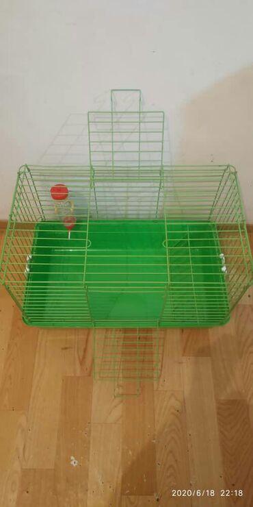 купить-ошейник-для-щенка в Кыргызстан: Клетка для морской свинки