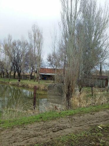 Недвижимость - Чат Кёль: Продаю большой учясток и 3 не большых пруда есть загон для скота дом