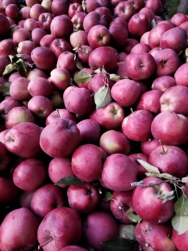 129 объявлений: Овощи, фрукты