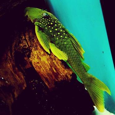 Приглашаем в группу аквариумистов в  в Бишкек