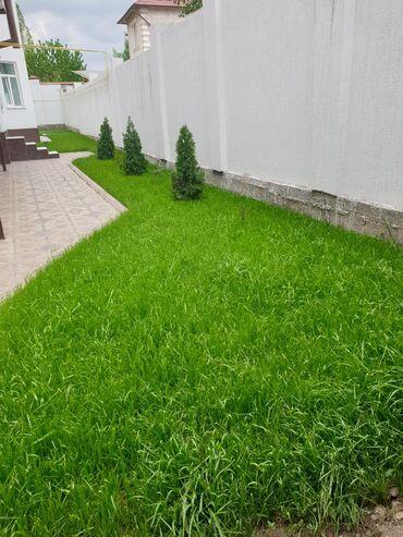 Газон в Бишкеке Посев газона качественно не дорого Качество работы