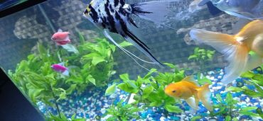 Животные - Заречное: Продаю аквариум на 50 литров полностью оборудован !!! Есть много рыб м
