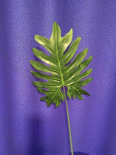 Маленький лист филодендрон ханаду для декорации высота 60 см в Бишкек