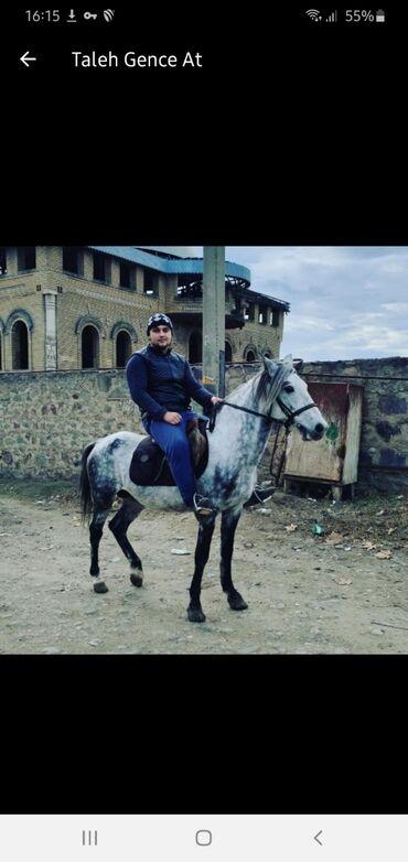 - Azərbaycan: Yorga At