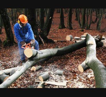 Motopila ile Ağaçları kesilmesi temizlenmesi budaasi qezali işlerin