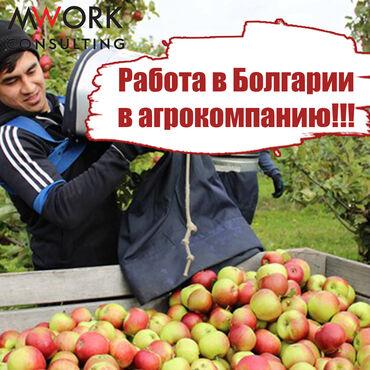 виза в англию в Кыргызстан: Работа в агрокомпании, работа в Болгарии, работа за границей, работа