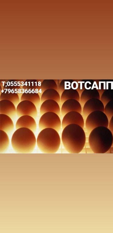 Продаю бройллерное инкубационое ЯЙЦО в Саразм