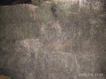 Сено 2 кос,срочно осталось 140 тюк