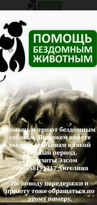 приюты для собак в Кыргызстан: Помощь и приют бездомным собакам. Поможем вместе выжить малышам в