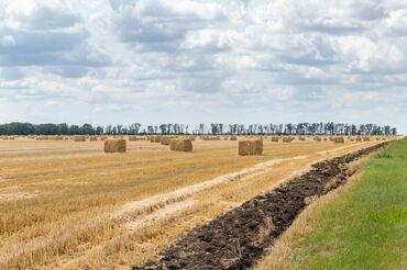 Продаю солому ячменя с поля,250 тюков находится в Беловодске в мураке