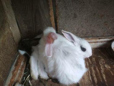 Кролики в Лебединовка: Продаю крольчат больше месяца метисы есть и другие кролики только