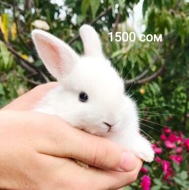 Декоративные кролики|