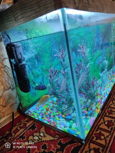 Akvariumlar