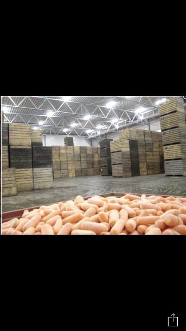 Продаю марковку корм корм для скота в Беловодское