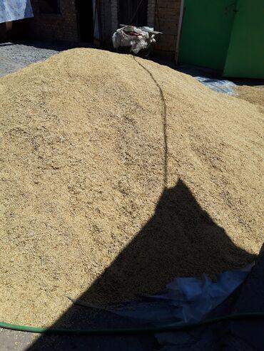 Животные - Кара-Балта: Продаю ячмень около 4 тонны самовывоз