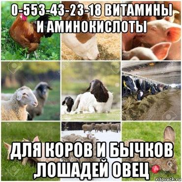 Витамины и аминокислоты  для бычков  в Бишкек